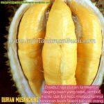 Bibit Durian Musangking – Si Raja Durian Dengan Aroma dan Rasa Paling Istimewa