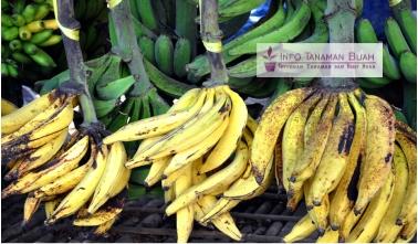 buah pisang tanduk