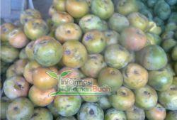 buah Mangga Apel