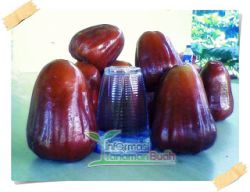 jambu air thongsamsi