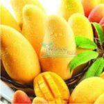 Jual Bibit Mangga Chokanan – Mangga Manis warna Kuning Mudah Berbuah