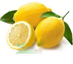 buah Lemon australia